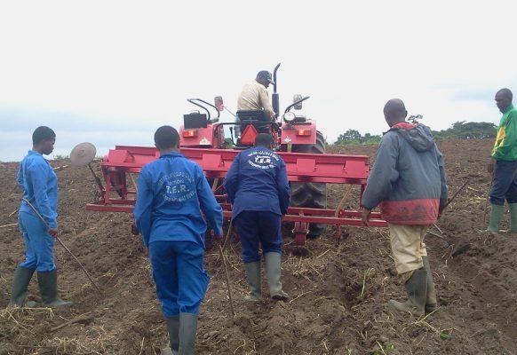 6 – le semis du maïs désormais mécanisé